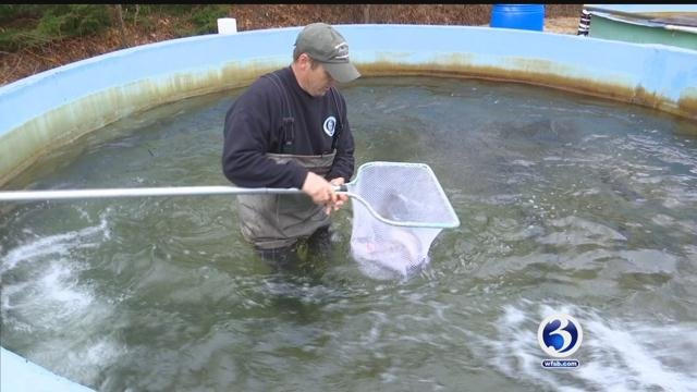 Harding's Trout Farm in Bethlehem were helping stock Connecticut rivers and streams. (WFSB)