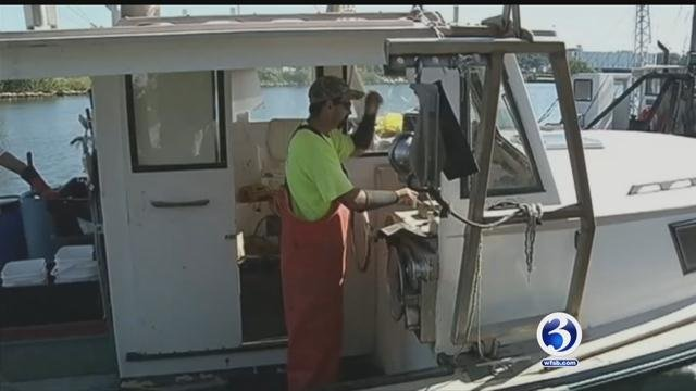 Connecticut lobster men said the number of lobsters locally area increasing. (WFSB)