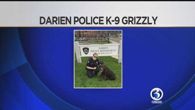 Grizzly is retiring from the Darien Police Department K-9, due to a medical condition. (WFSB)