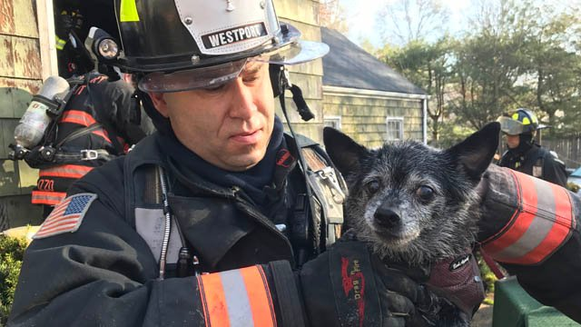 Two dogs were rescued from a house fire in Westport. (Westport Fire Dept. photo)