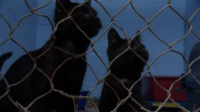 These cats are in need of a new home, after they were dumped (WFSB)