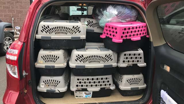 The Meriden Humane Society was notified that 20 cats were living in a car (Meriden Humane Society)