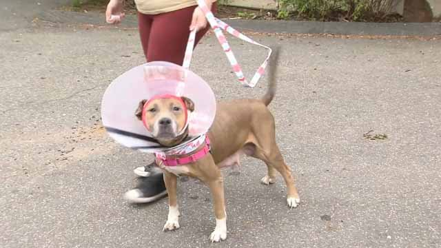 Jasmine is on the road to recovery (WFSB)