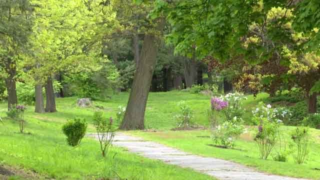 New plants were stolen from a park in Waterbury (WFSB)