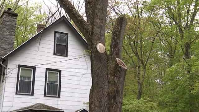 The Emerald Ash Borer killed a woman's tree in Seymour (WFSB)