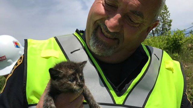 A Nowalk officer rescued three kittens from a construction site on Tuesday. (Norwalk police Facebook photo)
