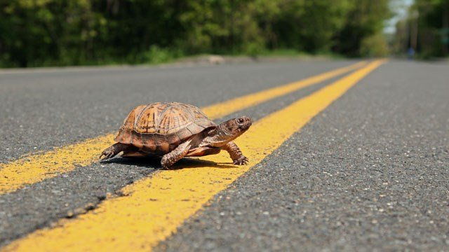 Pet turtles can be the cause of the multi-state Salmonella outbreak