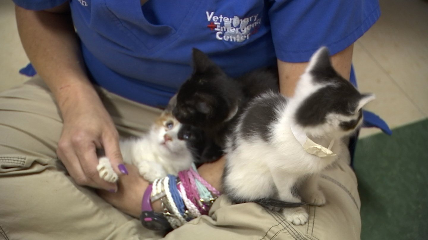 Someone abandoned 21 kittens in Canton over the weekend. (WFSB)