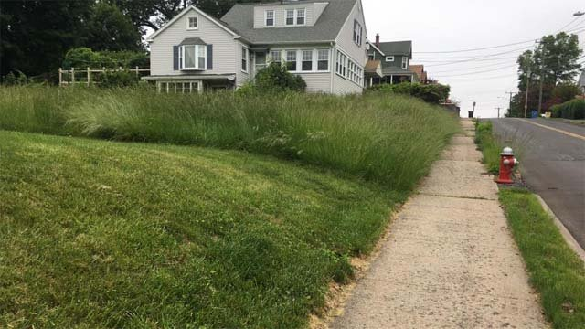 Homeowners who don't mow their lawns could get slapped with a fine. (WFSB)