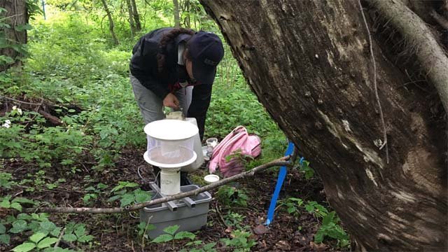 Mosquito trapping and testing has begun in Connecticut. (WFSB)