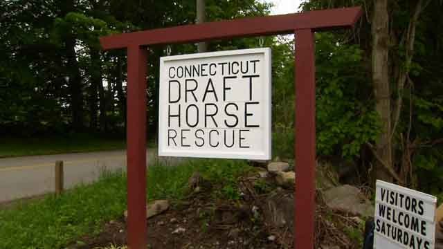 Connecticut Draft Horse Rescue is in need of help. (WFSB)