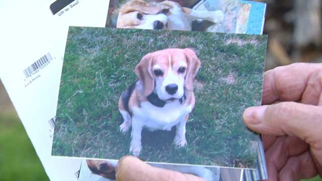 Erin the dog was killed after being attacked by three other dogs in Bloomfield. (WFSB)