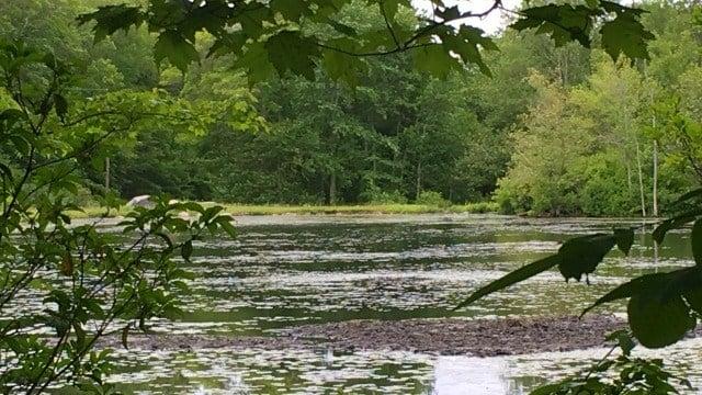 A peak at Pete's Pond through the brush.