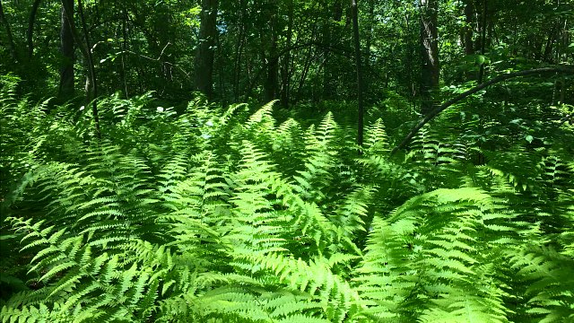 Lush, green surroundings in the heart of the trail