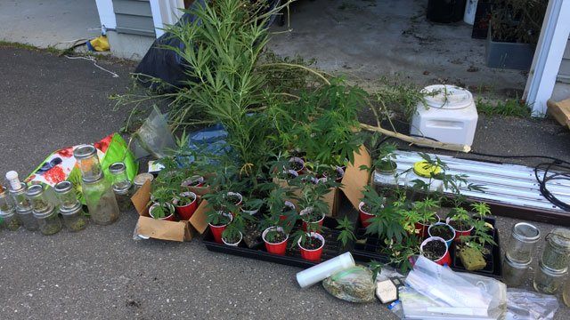 Marijuana plants and other items seized from a home in Clinton on Tuesday. (Clinton Police Department)
