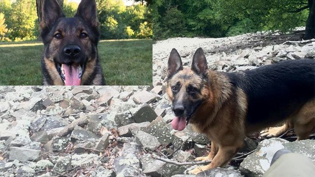 K9 Ido and Ugo helped with a rescue in Colebrook on Thursday night. (Connecticut State Police)