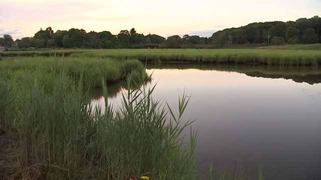 A vigil will be held on Sunday evening at the Branford town green (WFSB)
