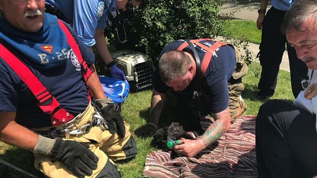 While some cats were saved, others perished in a West Haven house fire. (West Haven police)