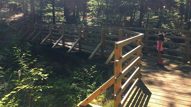 A bridge crosses the fast-moving brook along the path