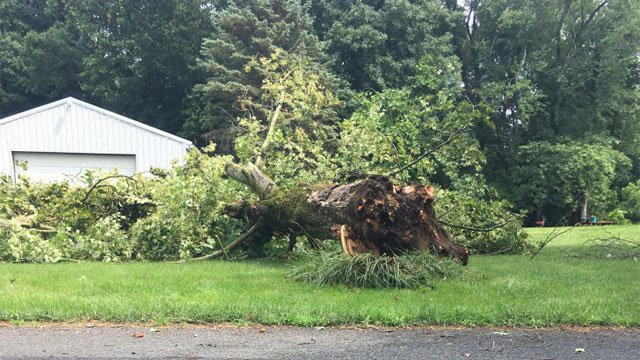 Trees are down in East Windsor after the storm. (WFSB)