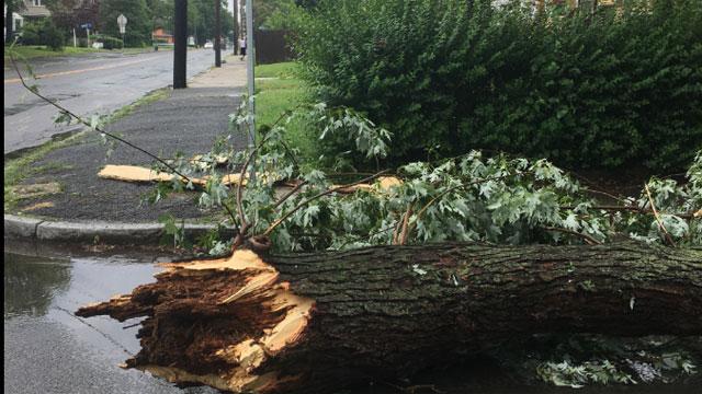 Storm damage reported in Ansonia. (Amanda Ambrose)