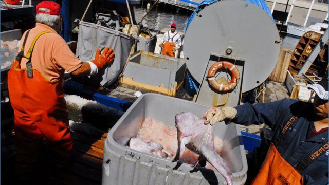 Fishermen from Bramante Seafood unload a haul of monkfish in Boston, Wednesday Aug. 9, 2006, after an eight-day fishing trip off the coast of Massachusetts. (AP Photo/William B. Plowman)