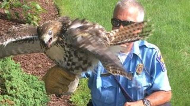 (Hamden police)