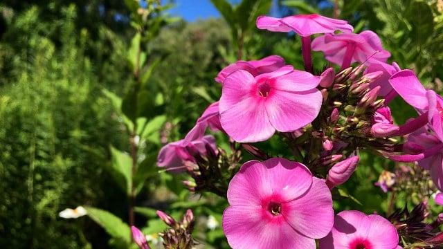 Flowers in full bloom in the butterfly garden