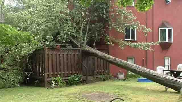 A tree nearly missed a house in Plymouth on Wednesday (WFSB)