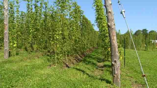 The push to brew and grow local is now becoming a concern. (WFSB)