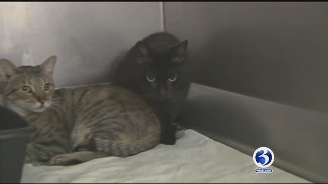 The state's budget deficit is impacting programs that help animals (WFSB)