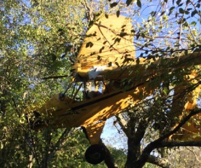 The Piper Cub plane is hung up in a tree in Salisbury. The co-pilot and trainee escaped with minor injuries. (WFSB)