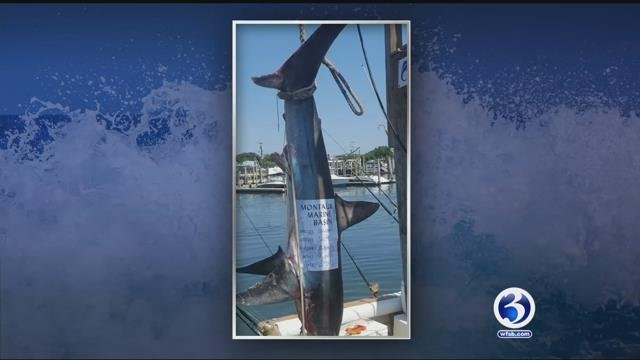Two CT men are proud of catching this thresher shark (submitted)
