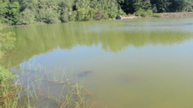 Blue-green algae blooms has caused the closure of the swimming area at KettletownState Park in Southbury. (DEEP)