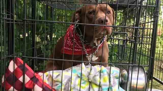 This dog was abandoned in Harwinton and now officials want to find his owners (Harwinton Animal Control)