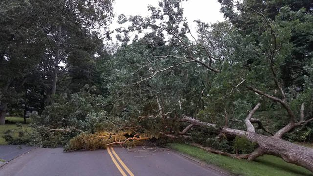 A fallen tree closed Partridge Lane in Clinton on Tuesday morning. (Clinton Dept. of Public Works)
