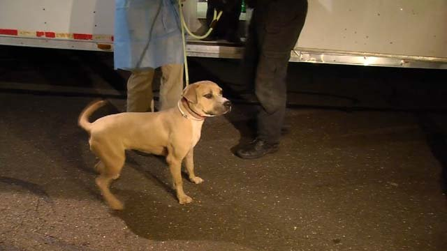 20 dogs from Texas were dropped off in Connecticut on Monday evening (WFSB)