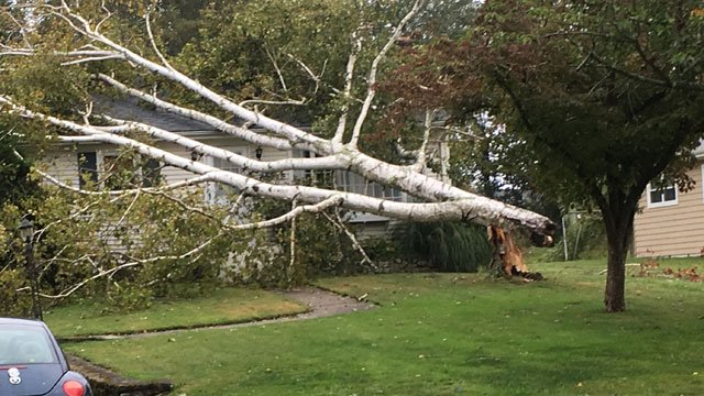 Strong winds caused downed trees on Lloyd Road in Waterford. (WFSB)