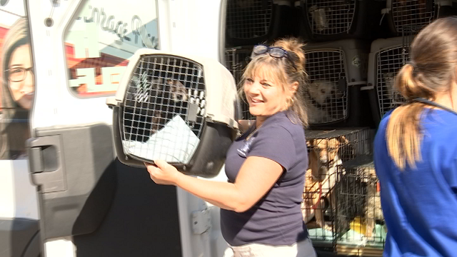 Workers at the Shoreline Animal Hospital in East Haven are helping to rehabilitate and rehome dozens of dogs that were rescued after Hurricane Harvey. (WFSB).