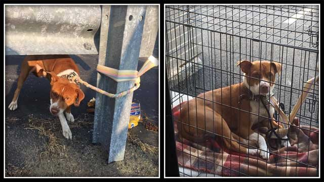 This dog was abandoned, tied to a guardrail in Waterbury (Submitted)
