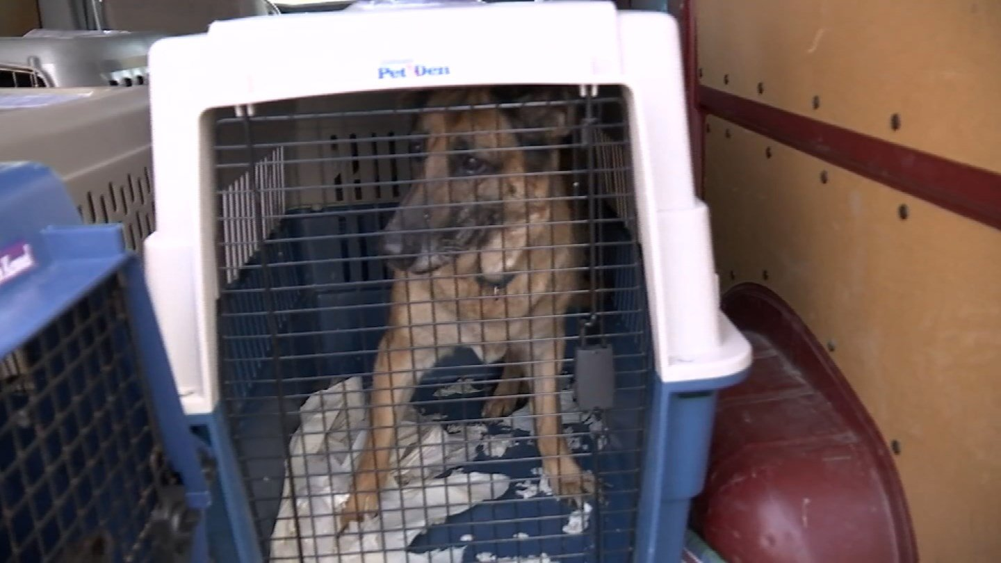 Dogs rescued from Irma in Florida landed in Connecticut on Wednesday. (WFSB)