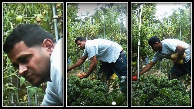 PD: Man spotted stealing veggies from garden - WFSB 3 Connecticut