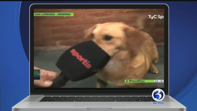 Dog takes on soccer, 'Game of Thrones' Taylor Swift dub, viral kitten naptime