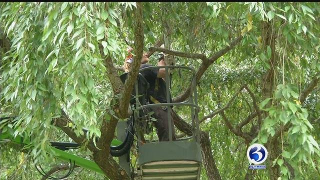 Crews are expected to remove gypsy moth damaged trees along I-95 in New London County. (WFSB)