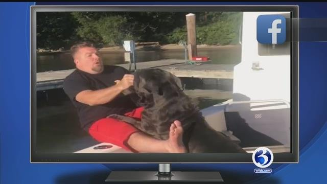 Dog pushes man overboard, Booze Bangle, hoof shoes, dog surrounded by cows