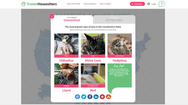 The findings by Trusted-House-Sitters found that the most popular pet in Connecticut is the Chihuahua. (trustedhousesitters)