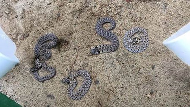 A New Hartford man was charged with importing exotic snakes to Vermont.(Vermont Fish & Wildlife)