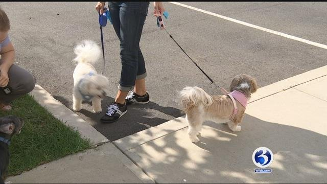 Mandatory dog DNA testing is being looked at as an option for a Rocky Hill complex (WFSB)