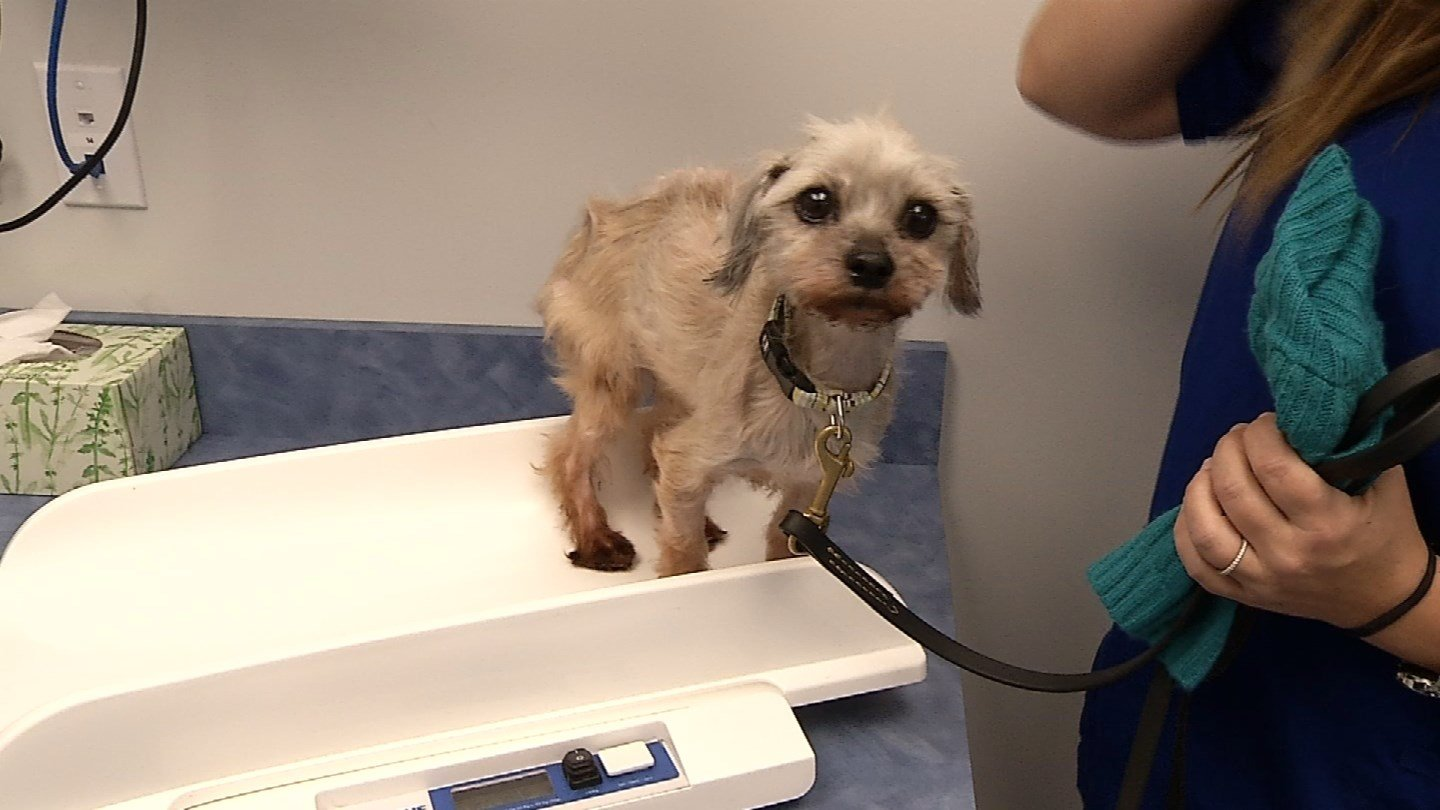 Daisy was found to he malnourished and frail in East Haven last week. (WFSB)