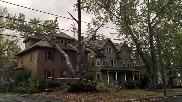 A tree came down onto a Hartford home on Tuesday afternoon (WFSB)